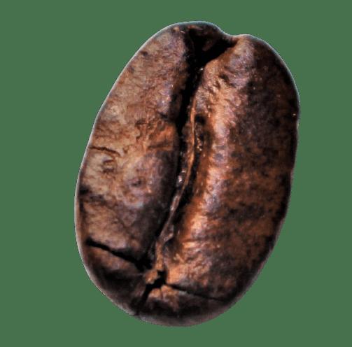Kaffee Bohne Arabica